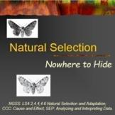 Evolution Natural Selection Peppered Moths (3)