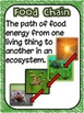 FOOD CHAINS Poster Set / Student Vocabulary Book