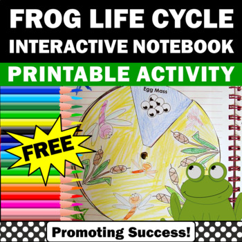 Frogs Life Cycle FREE Interactive Notebooks Life Sciences