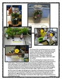 Following Directions Activity: Terrarium in a Jar (Reading