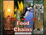 Food Chains PowerPoint (Animals, Energy and Food Chains)