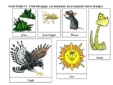 Food Web and Food Chain Card Activity