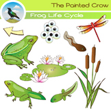 Frog Life Cycle Clip Art - 18 Piece Set - 5 Stages of Frog