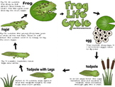 Frog Lifecycle Notebook {Preschool / Kindergarten / 1st /