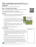 Gram Stain Virtual + Physical Lab