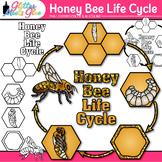 Honey Bee Life Cycle Clip Art
