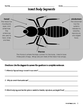 Insect Body Parts Diagram & Worksheet