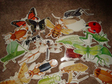 Insects for the Bulletin Board
