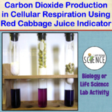 Lab: Using Cabbage Juice to Observe CO2 Production in Cell