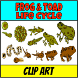 Frogs lifecycle and habitat clipart
