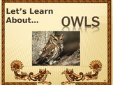 Let's Learn About Owls! (Powerpoint)