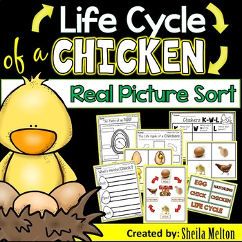 Life Cycle of a Chicken