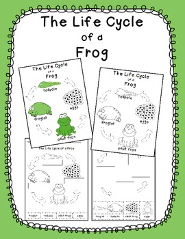 Frog Life Cycle in English