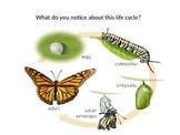 Life Cycles DBQ