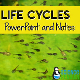 Life Cycles PowerPoint and Notes