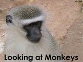 Monkey - PDF presentation