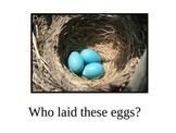 Oviparous (Egg -laying) Animal PowerPoint - Adjective Study