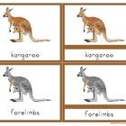 Parts of a Kangaroo- Montessori Nomenclature Cards with De