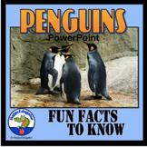 Penguins - Fun Facts About Penguins PowerPoint
