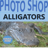 Photographs: Alligator