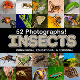 Photos Photographs INSECTS