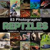 Photos Photographs Reptiles 83 clip art