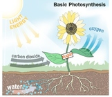 Photosynthesis - Lesson Presentation, Rap Song, Videos, As