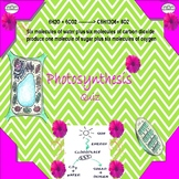 Photosynthesis Quiz/Homework/Assessment Special Needs Education