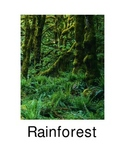 Pictures of animals in the rainforest