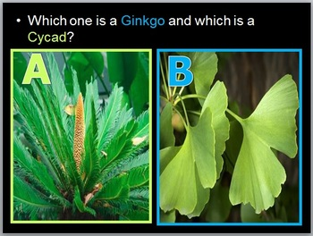 Plant Evolution, Non-vascular Plants, Plant Unit Intro and