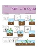 Plant Life Cycle Graphics