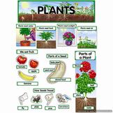 Plants Bulletin Board Set CTP1761