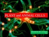 Plants and Animal Cells