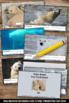Winter Activities Polar Bears Nonfiction Text Reading Comp
