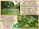 Protista Kingdom (Algae and Protozoa) PowerPoint and Notes