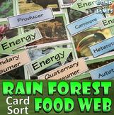 Rainforest Food Chain & Food Web Card Sort
