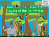 Rainforest Layers Presentation & Craft