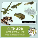 Frog and Toad Life Cycle Clip Art {Commercial Use}