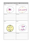 SCIENCE - CELLS -Stages of Mitosis - outline