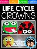 Science Life Cycle Hats (English & Spanish)