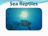Sea Reptiles - Marine Life Vol. 5 - Slideshow Powerpoint P