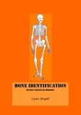 Skeleton: Human Biology Identification: Quiz, bell ringer,