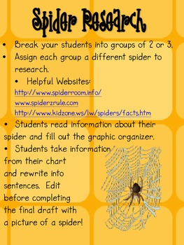 Spider Report and Activities