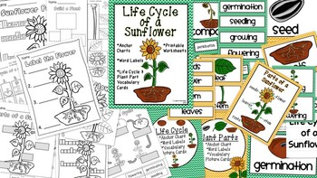 Sunflower Life Cycle and Plant Parts Unit