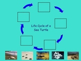 "Turtle Life Cycle Smart Doc- Non-fiction ""big book"" ; Inte"