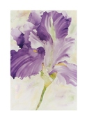 Watercolor Project Pack - Purple Iris