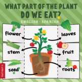 What part of the plant do we eat? fold & learn