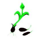 Seeds Software