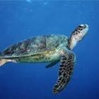 Turtle-rific Teaching Time